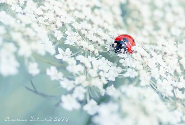 love bug by tasiy