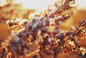 Golden by EugenieA