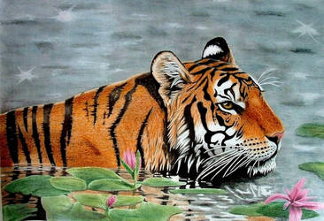 Drawn Tiger in Water by JasminaSusak