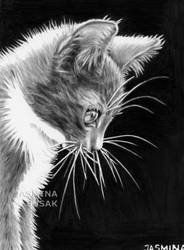 Drawn Kitty by JasminaSusak