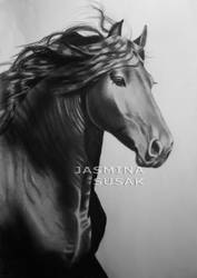 Black friesian horse by JasminaSusak