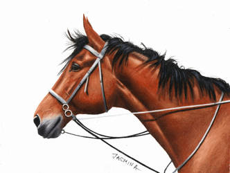Colored Pencil Drawing: Horse by JasminaSusak