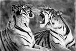 Graphite Drawing of Two Tigers by JasminaSusak