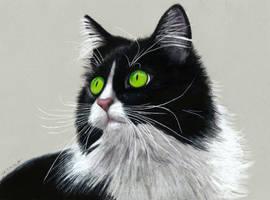 Pencil Drawing of a Tuxedo Cat by JasminaSusak