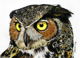 Colored Pencil Drawing of an Owl by JasminaSusak