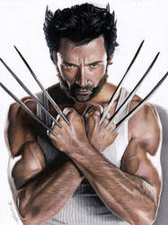 Drawing Wolverine by JasminaSusak