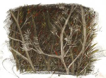 Dark trees by kain-hallis