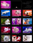 Birman Kittens Calendar by donia