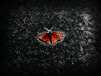 Butterfly Edit 1 by asylum-inmate
