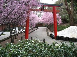 Springtime Sakura by excelon