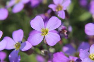 Little Purple 3 by wuestenbrand