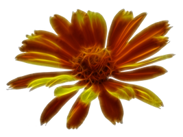 Digitized Blossom 2 Stock by wuestenbrand