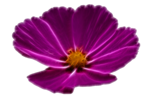 Digitized Blossom 3 Stock by wuestenbrand
