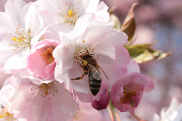 Cherry Bee by wuestenbrand