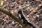 Squirrel by wuestenbrand