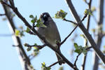 House Sparrow by wuestenbrand