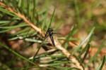 Little Black Fly by wuestenbrand