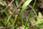 Dragonfly 7 by wuestenbrand