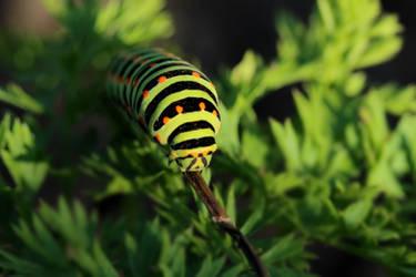 Caterpillar 1 by wuestenbrand
