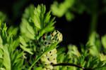 Caterpillar 2 by wuestenbrand