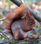 Wild animal 216 - cute squirrel by Momotte2stocks