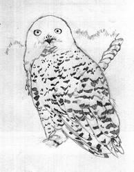 . : Snowy Owl: . by yybear2826