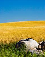 Stone Wheat by WayneBenedet
