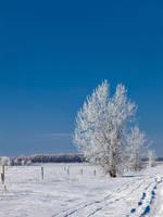 A Gentle Breath of Winter (0958) by WayneBenedet