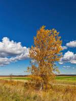 Prairie Autumn (4098) by WayneBenedet
