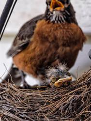 I'm Really Sleepy Mom (WAB5732) by WayneBenedet