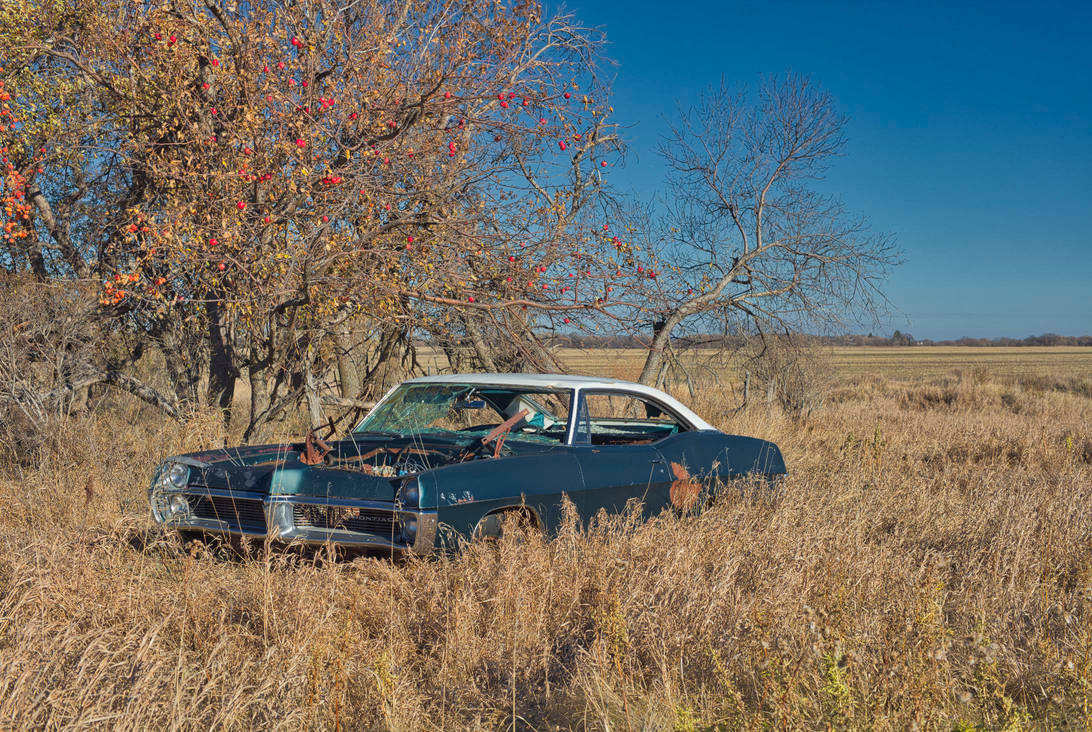 In The Old Orchard (WAB6287) by WayneBenedet