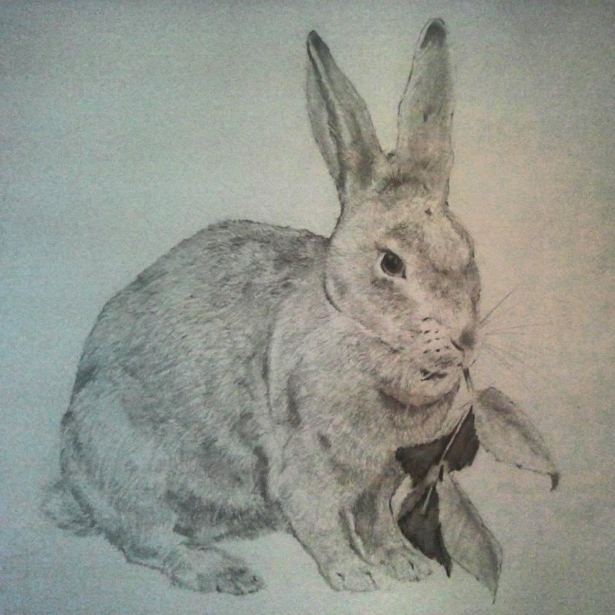 Rabbit Pencil Sketch By Vladik1112 On Deviantart
