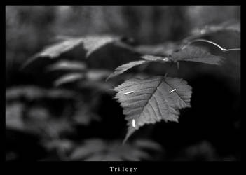 Trilogy by pyramid222
