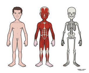 Partes do corpo humano: menino by Renves