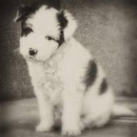 Cute by BobRock99