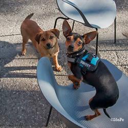 street dog and sweet dog by BobRock99