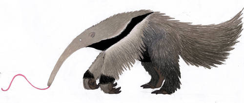 Anteater by AbsoL-G