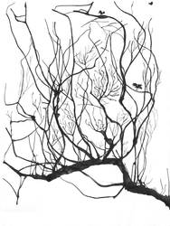 Old drawing: The branch by AbsoL-G