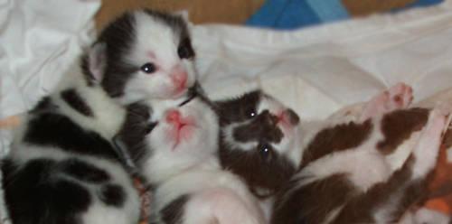 trio kittens by Dvenas