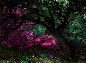 Grassy labyrinth by Jujika