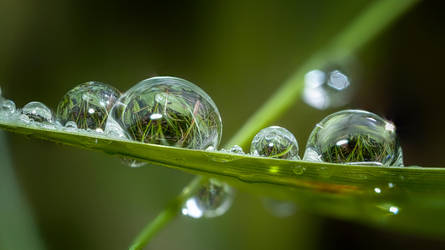 Raindrops on a Blade of Grass by Nini1965