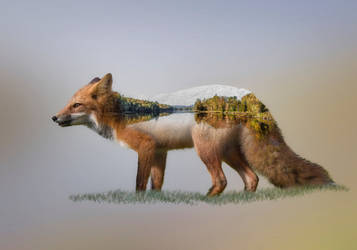 A Double Exposure of a Red Fox and a Lake by Nini1965
