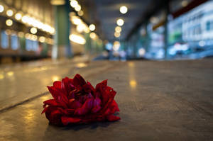 Lonely Flower by maralah