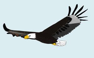 bald eagle by luginsculpture47