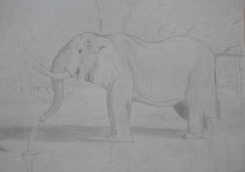 elephant sketch by luginsculpture47