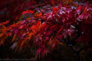Fire bush by Elfsire