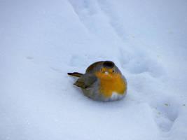 Winter bird 2 by Flore-stock