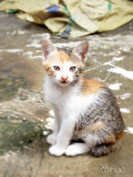 Baby cat 0.1 by wakhaa