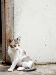 Baby cat 0.3 by wakhaa