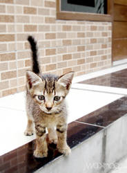 Baby cat 0.5 by wakhaa